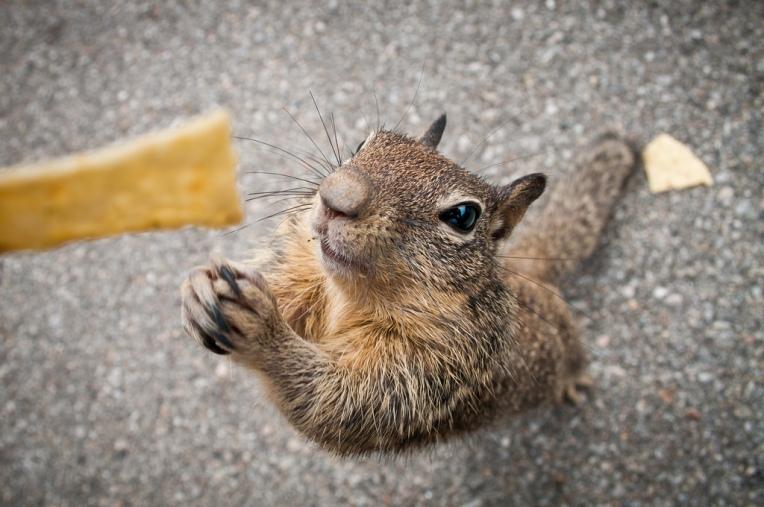donate squirrel